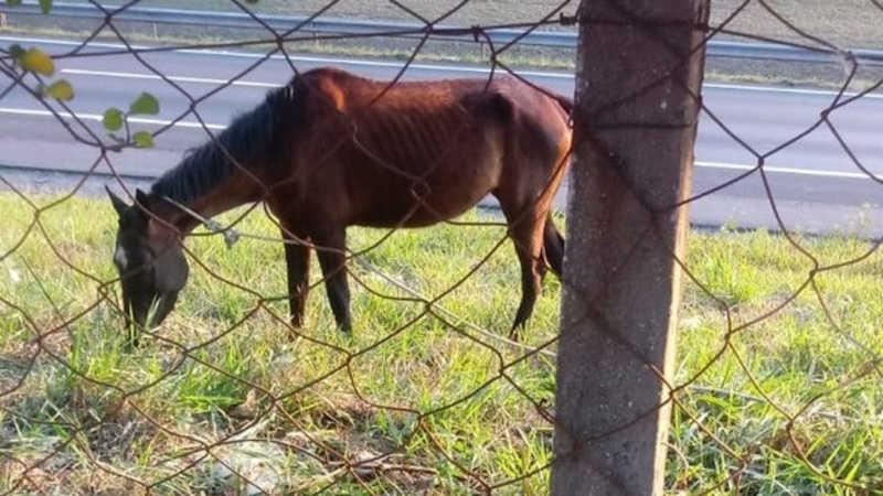 Tentativa de resgate termina com morte de égua em Rio Claro, SP; vídeo