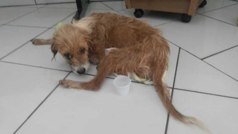 Morador de Rosana (SP) recebe multa de R$ 3 mil por maus-tratos a cadela