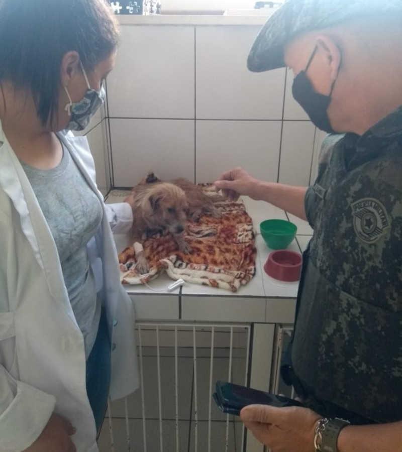 Animal apresenta desidratação e sinais característicos de cinomose e erlichiose canina — Foto: Polícia Ambiental