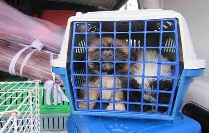 Polícia Civil e Prefeitura de Santo André (SP) resgatam 30 cães de canil clandestino