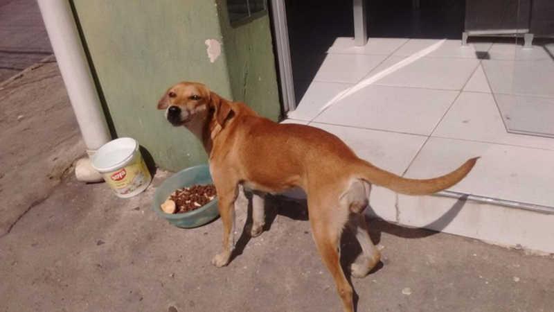 Campanha arrecada ração para cães de ativista que morreu em Sorocaba, SP