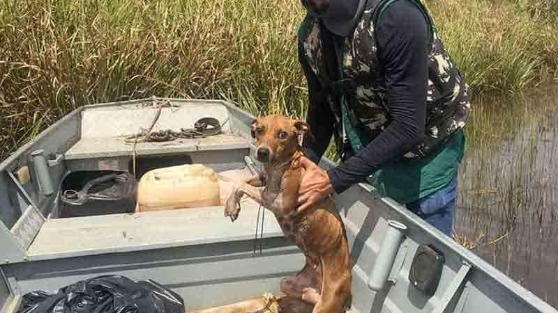 Fiscais encontraram cadela e fizeram resgate em Araguaína — Foto: Divulgação/Prefeitura de Araguaína
