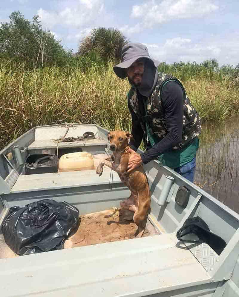 Fiscais ambientais fazem ação em rio e acabam encontrando cadela perdida na água: 'Muito desgastada'