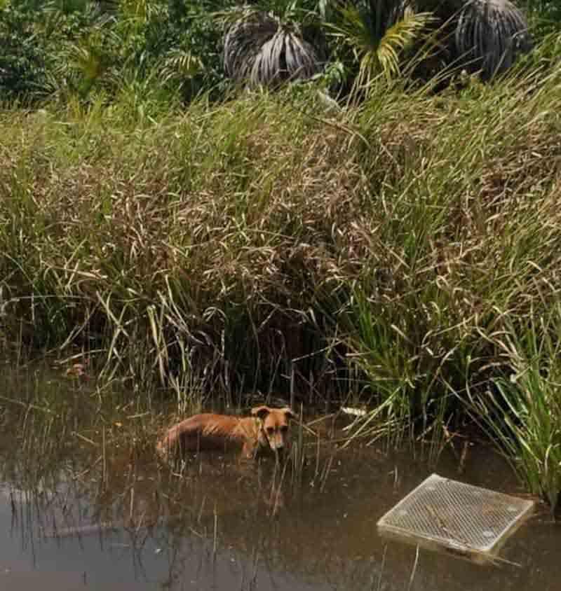 Cadela foi encontrada perdida no rio Lontra, em Araguaína — Foto: Divulgação/Prefeitura de Araguaína