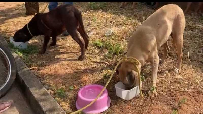 Cachorros estavam abandonados há seis dias em uma casa. / Foto: Divulgação