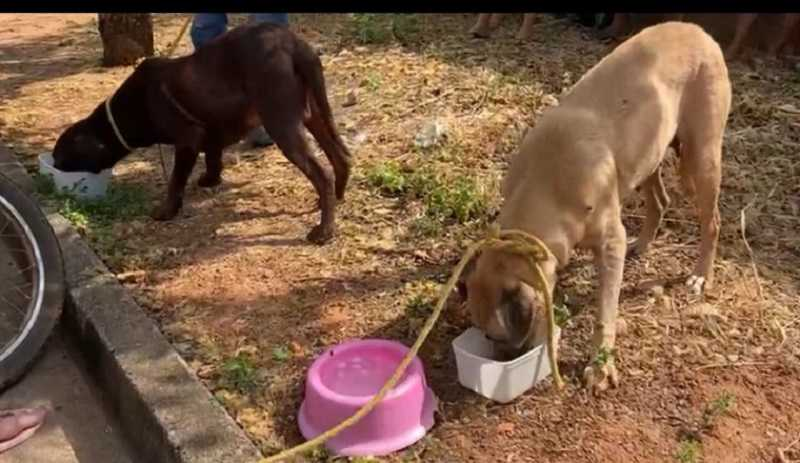 Cachorros passam vários dias presos sem comida nem água em Araguaína (TO) e um morre