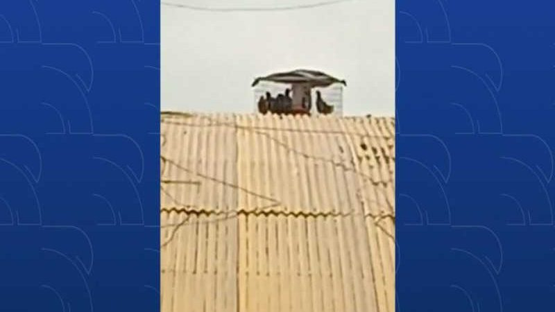 Vídeo mostra pombos presos em gaiolas em telhado de Rodoviária de Palmas (Foto: Rodrigo João Pimenta)