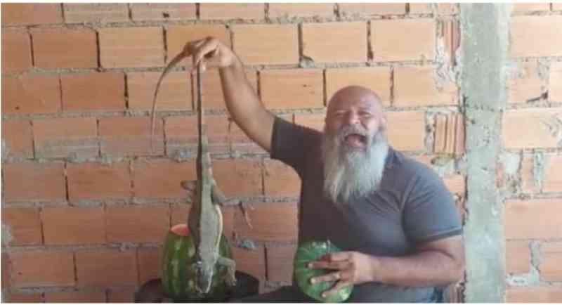 Camaleão foi colocado na melancia para ironizar o governador Carlesse / Foto: Divulgação
