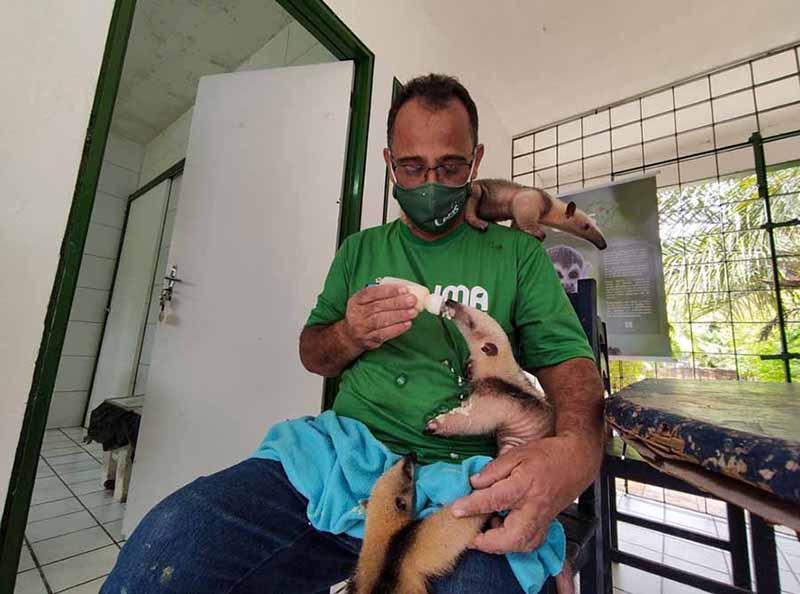 IMA e IBAMA arrecadam leite e objetos para animais silvestres vítimas de crimes ambientais em Alagoas — Foto: Ascom/IMA