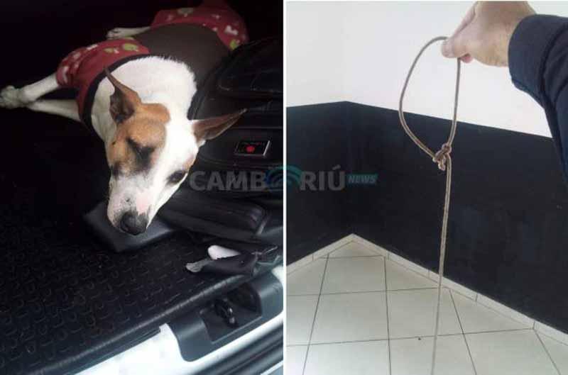 Homem tenta matar cachorro enforcado em Balneário Camboriú, SC