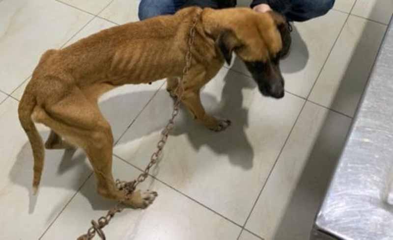 Polícia Civil resgata cachorros com estado extremo de desnutrição em Brusque, SC