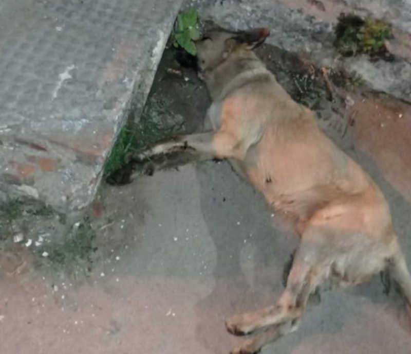 Cachorros comem alimentos com 'chumbinho' e morrem envenenados em Mata Grande