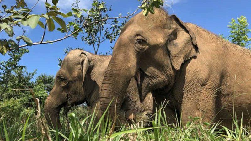 Justiça argentina decide a favor da transferência dos quatro elefantes do Ecoparque para santuário brasileiro
