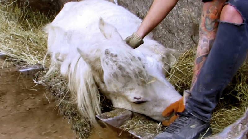 Grupos conservacionistas da Argentina pedem que os animais sejam considerados sujeitos de direito