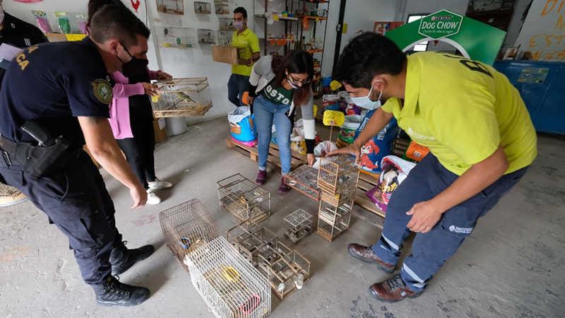 O tráfico de vida selvagem é uma das principais atividades ilícitas no mundo.