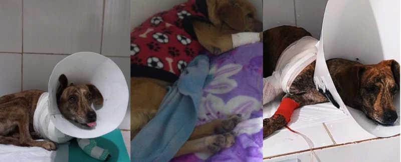 Animais atropelados e abandonados em Vitória da Conquista (BA) contam apenas com a ajuda de ONG's