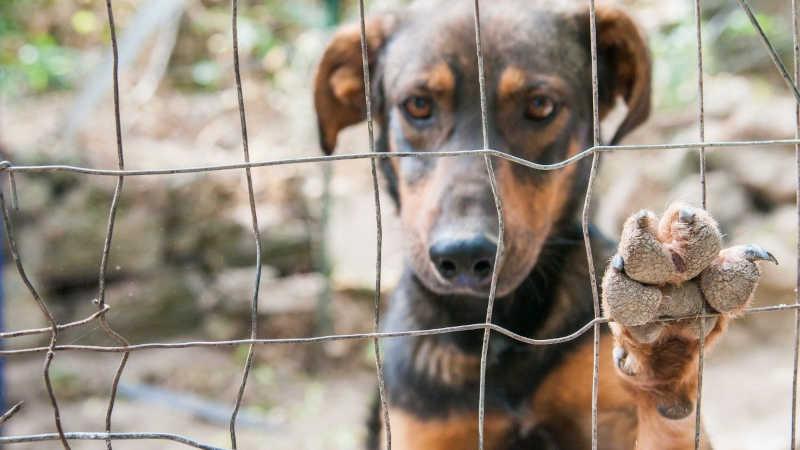 Pandemia trouxe questões relacionadas à diminuição de doações e ao aumento dos maus-tratos contra animais. Foto: Shutterstock