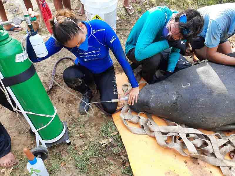 Fêmea foi resgatada em um rio na cidade de Itapipoca por riscos à sua saúde. — Foto: Divulgação/Aquasis