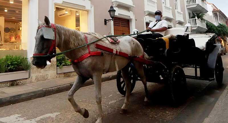 Agora não se sabe se os animais seriam retirados de seu ofício tradicional na Cidade Amuralhada.