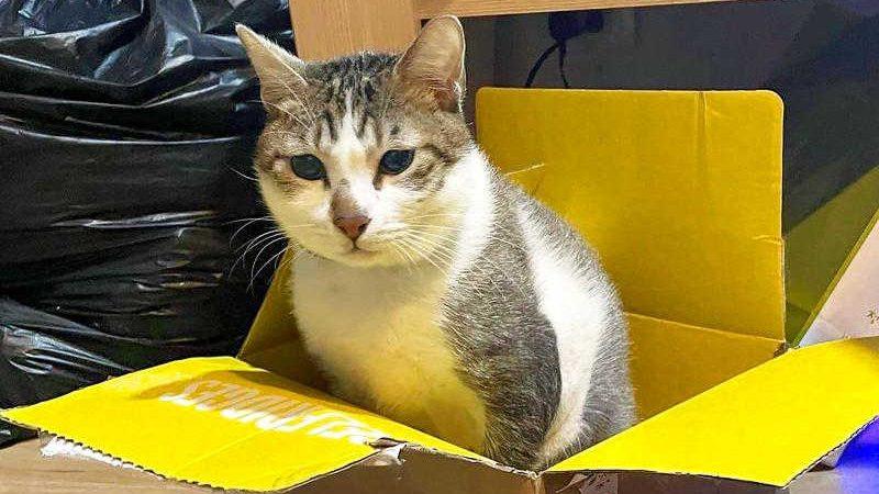O gato chamado Tea Tea sentado em uma caixa, em uma foto sem data. (Cortesia de Fan Shu-hsien via CAN)