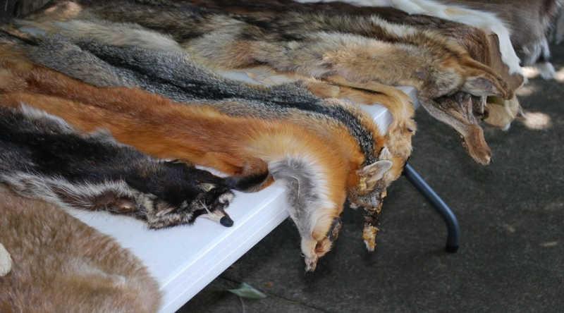 Coligação bloqueia mais de 11,6 milhões de listagens online ligadas ao comércio ilegal de animais selvagens