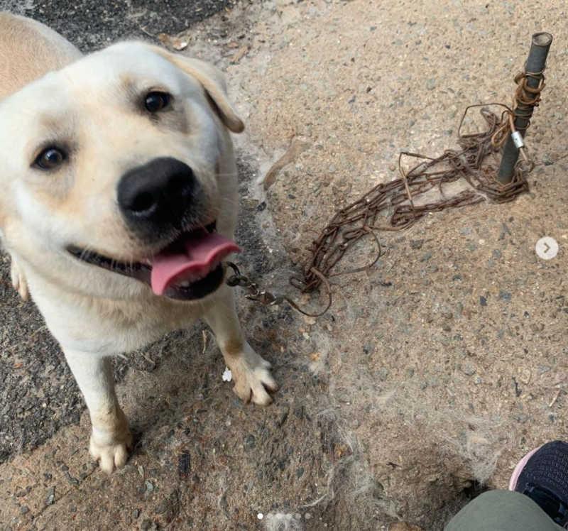 A maioria dos coreanos apoia a proibição de criar cachorros acorrentados