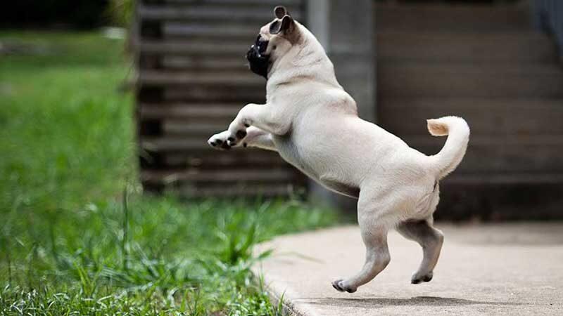 Cadastro de cadelas para 4ª Campanha de Castração de Cães e Gatos é cancelado pelo Ibram no DF