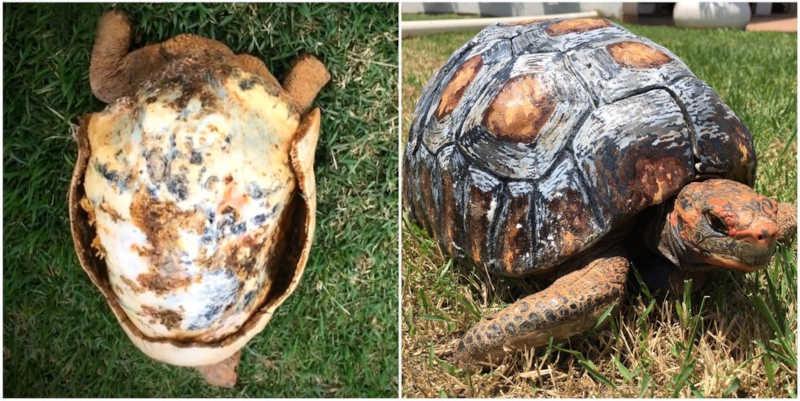 Fred perdeu o casco em um incêndio em 2015, mas ganhou uma nova proteção feita por designer 3D — Foto: Cícero Moraes/Arquivo pessoal