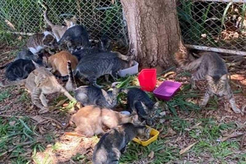 Mistério em Brasília: voluntários denunciam sumiço de gatinhos de rua