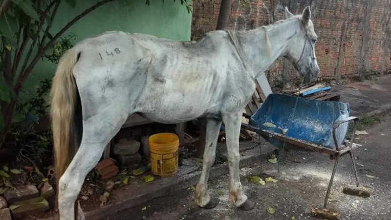 Égua é resgatada em situação de maus-tratos em Planaltina