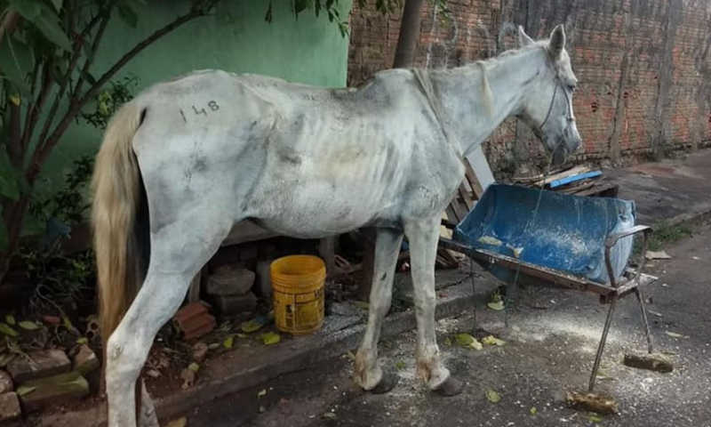 Égua é resgatada em situação de maus-tratos em Planaltina, DF