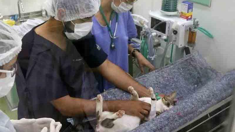 Projeto de lei federal destina 5% do valor das multas ambientais para castração de animais