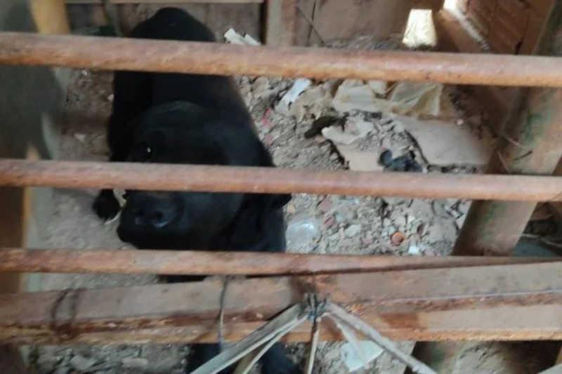 Cão ficava preso em cubículo cheio de entulho em ferro-velho no DF