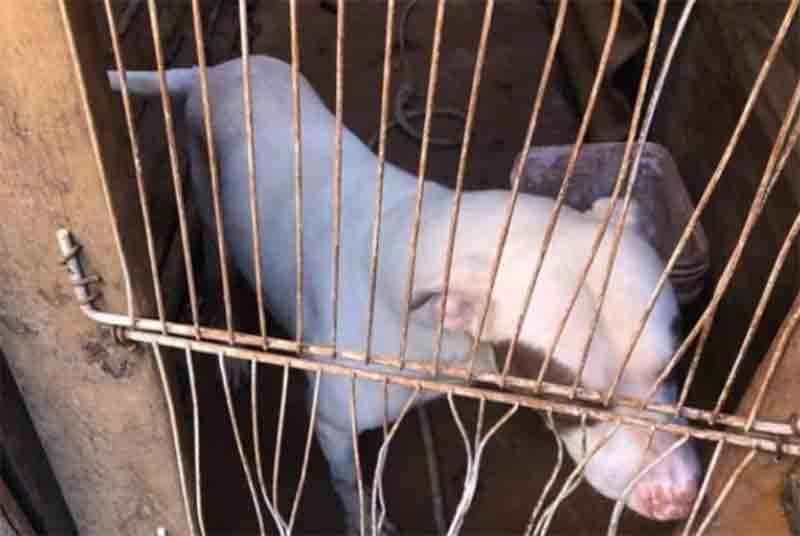 Todos os dias, pelo menos um animal sofre maus-tratos no Distrito Federal
