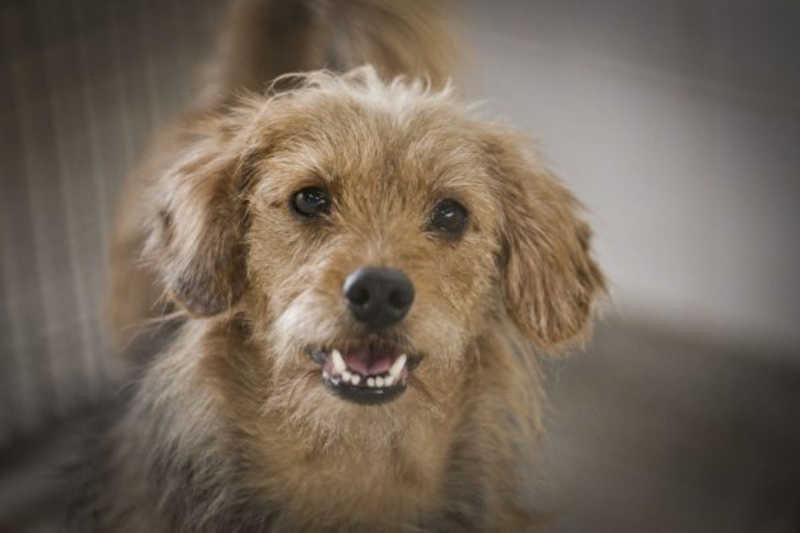 Governo institui selo livre de crueldade para quem não realizar testes em animais no DF