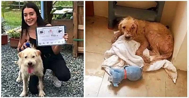 Cachorro que teve pele queimada com água fervente é resgatado e encontra lar adotivo no Equador