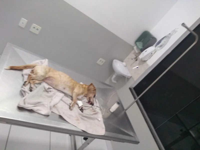 Animal é deixado para morrer às margens do Rio Doce e é resgatado por policiais e Zoonoses em Colatina, ES