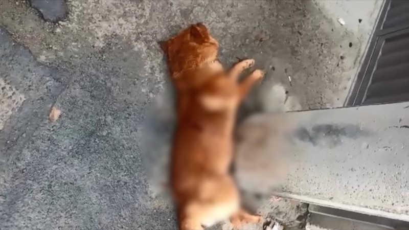 Cachorro é morto durante operação em Vitória — Foto: Reprodução