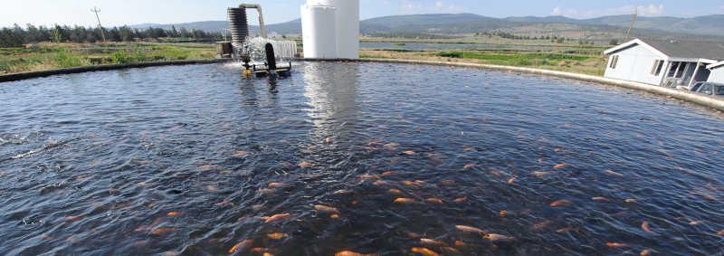 Criação de animais aquáticos