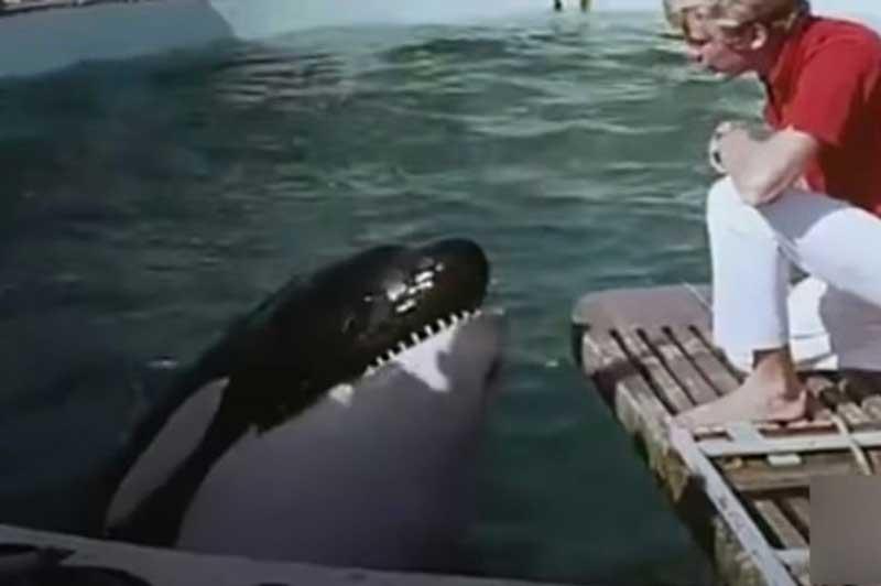 Orca que tentou morder treinadores se matou com cabeçadas no tanque