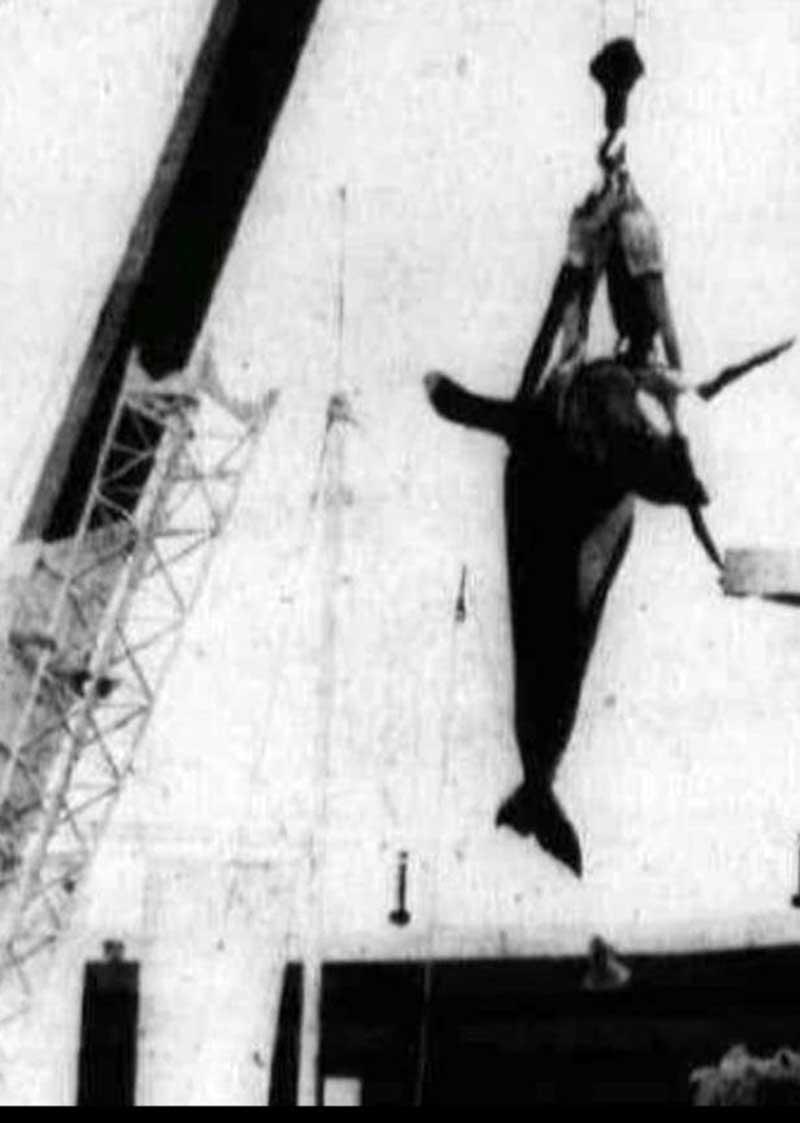 Triste final: o corpo de Hugo é retirado do tanque.  Mas será que ele se matou?  (Imagem: Projeto Orca)