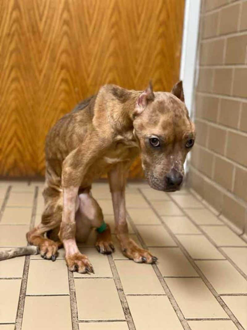 Casal é preso em caso grave de maus-tratos a animal; a mulher alega que a cachorra era de rua