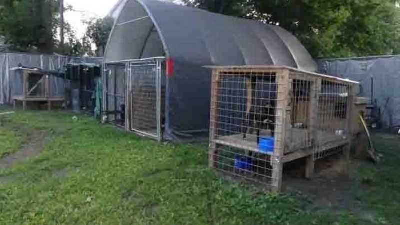 Operação apreende 8 cachorros possivelmente envolvidos em rinhas de cães nos EUA