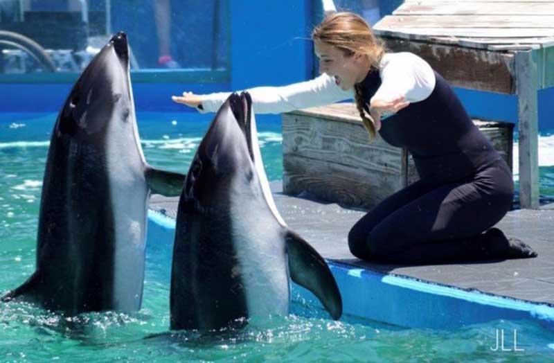Cinco golfinhos e um leão-marinho morrem no Miami Seaquarium e ativistas exigem explicações
