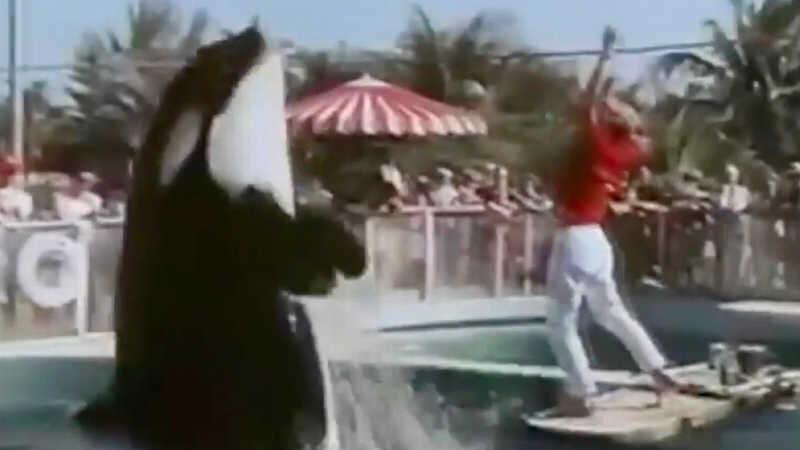 Hugo foi mantido no Miami Seaquarium na Flórida por mais de 12 anos após ser capturado com apenas três anos de idade