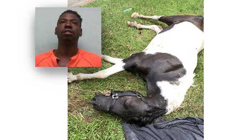 Homem do Mississippi (EUA) sequestrou o cavalo que ele é acusado de espancar até a morte, dizem os policiais