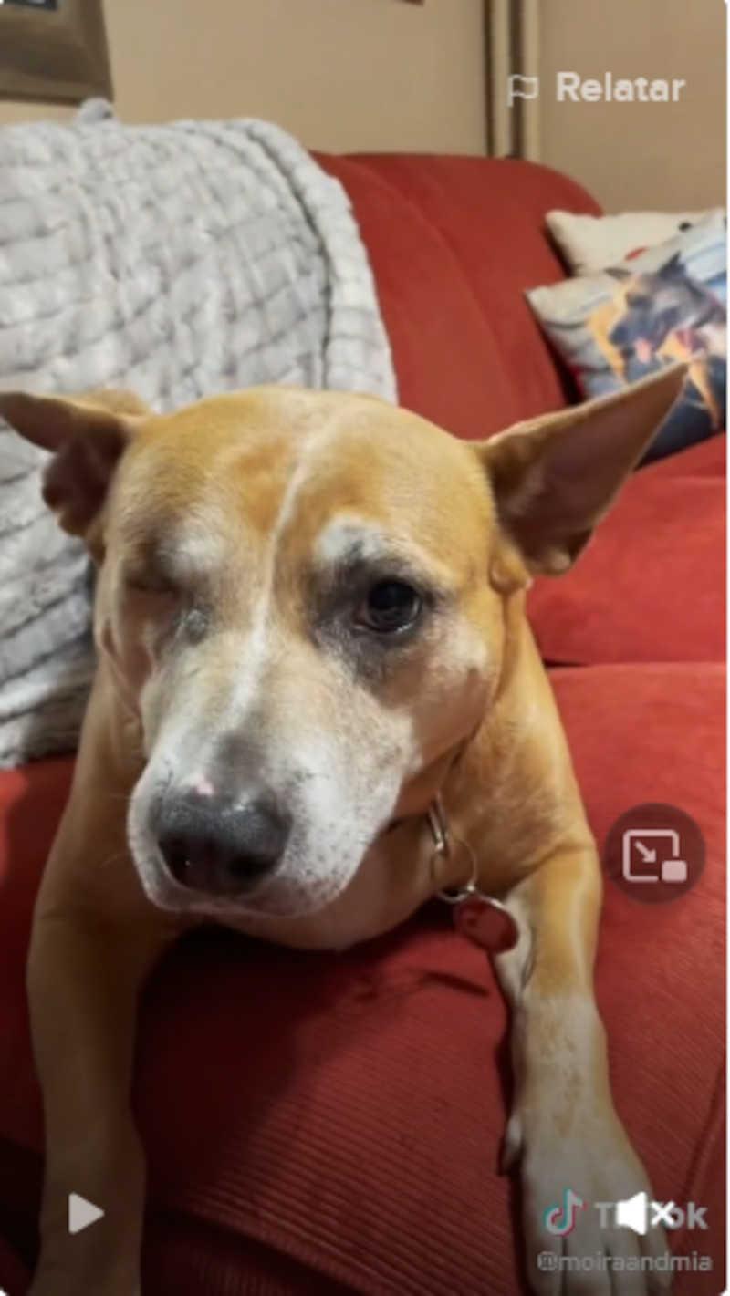Esta cachorra de um olho só não conseguia uma família, mas finalmente encontrou um lar