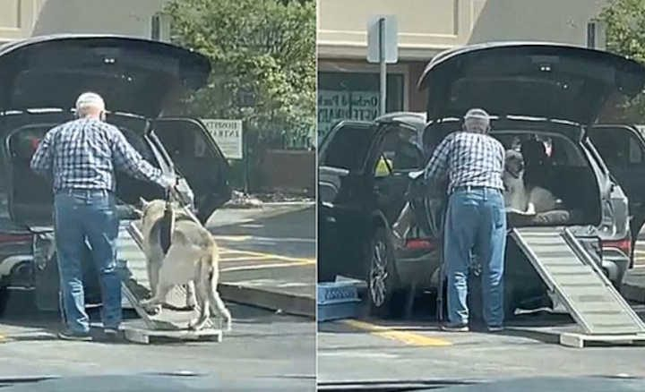 Homem constrói rampa para ajudar o seu cão idoso a entrar no carro. Foto: Reprodução YouTube/ViralHog | Edição: Amo Meu Pet