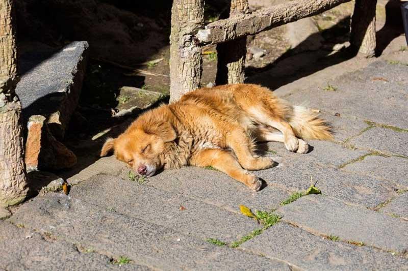 Espanha legisla para parar de liderar os maus-tratos e o abandono de animais de estimação