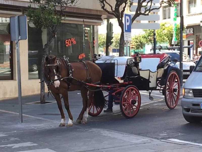 Parem os passeios de charrete na Espanha: ajude a si mesmo e aos cavalos e caminhe!